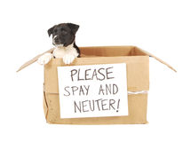 A puppy in a cardboard box.