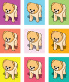 Puppy cards or vectors. Puppy or dog multicolored vector illustrations Royalty Free Stock Photos