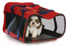 Puppy carrier Royalty Free Stock Photo