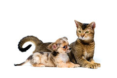 Puppy with a cat Stock Photo