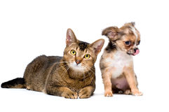 Puppy with a cat Royalty Free Stock Photos