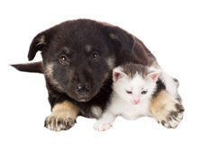 Puppy and cat Stock Image