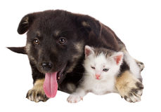 Puppy and cat Royalty Free Stock Photos