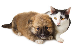 Puppy and cat Stock Photos