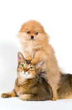 Puppy and cat Royalty Free Stock Images