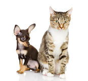 Puppy with a cat attentively look in the camera. Stock Photography