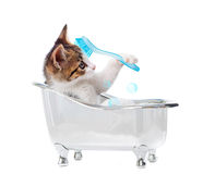 Puppy cat in the bathtub Stock Photography