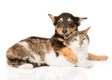 Puppy and cat friendship.  on white background Stock Photography