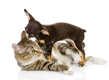 Puppy with a cat look at each other. Royalty Free Stock Images