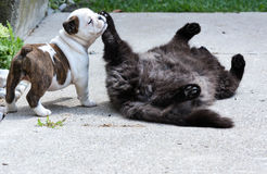 Puppy and a cat playing Stock Images