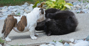 Puppy and cat playing stock images