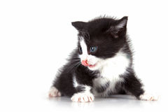 Puppy cat Royalty Free Stock Image