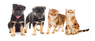 Puppy and cat Royalty Free Stock Photography