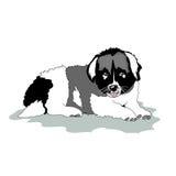 Puppy of  Caucasian shepherd Stock Images