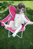 puppy in chair stock photos