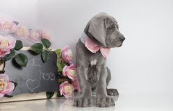 Puppy and chalkboard Royalty Free Stock Photo