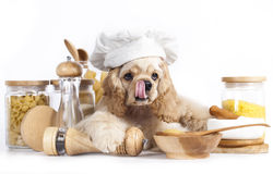 Puppy in chef's hat Royalty Free Stock Photography