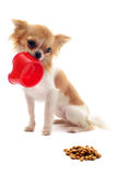 Puppy chihuahua and food bowl Royalty Free Stock Images
