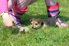 Puppy and child play with rope Stock Photo