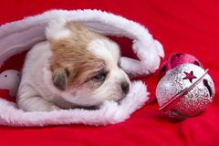 The Christmas puppy stock image