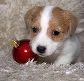 Puppy with a christmas ball Royalty Free Stock Image