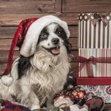 Puppy Christmas cards Royalty Free Stock Image
