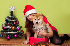 Puppy with Christmas decorations Stock Photo