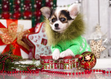 puppy  in Christmas decorations Royalty Free Stock Photos