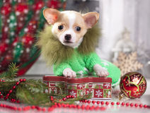 puppy  in Christmas decorations Stock Photo