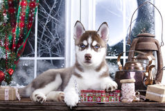 puppy and Christmas decorations Royalty Free Stock Images