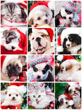 Puppy in Christmas decorations. Kitten and puppy with santa hats stock images