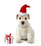 Puppy and christmas gift Stock Photos