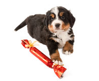 Puppy with christmas gift Royalty Free Stock Photography