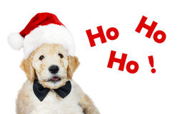 Puppy with Christmas hat. Cute goldendoodle puppy with Santa Christmas hat and black bow tie Royalty Free Stock Images