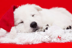 Puppy in a Christmas hat Royalty Free Stock Photography