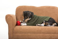 Puppy and a Christmas ornament. A puppy in a green sweater plays with a Christmas ornament on a miniature couch. Scene is isolated against a white background stock image