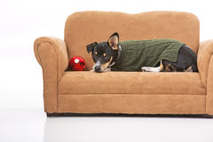 Puppy and a Christmas ornament. A puppy in a green sweater poses next to a Christmas ornament on a miniature couch. Scene is isolated against a white background royalty free stock photo
