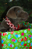 Puppy Christmas Present Royalty Free Stock Photography
