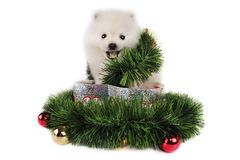 Puppy Christmas Present Stock Photography