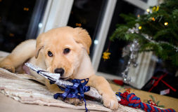 Puppy and christmas 3 Stock Photography