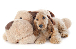 Puppy cocker spaniel and toy Stock Photos