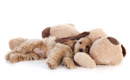 Puppy cocker spaniel and toy Stock Images