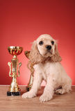 Puppy cocker spaniel and trophy Royalty Free Stock Photos