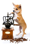 The puppy with a coffee grinder Royalty Free Stock Image