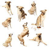 Puppy collection Royalty Free Stock Photography