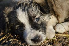 Puppy. Colorful, a little puppy lies Royalty Free Stock Image