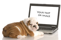 Puppy on computer stock photography