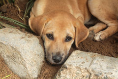 Puppy is cooled in a flower garden Stock Photography