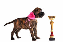 Puppy with a Cup Royalty Free Stock Photography