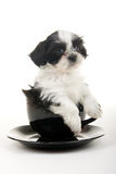 Puppy In A Cup royalty free stock photography